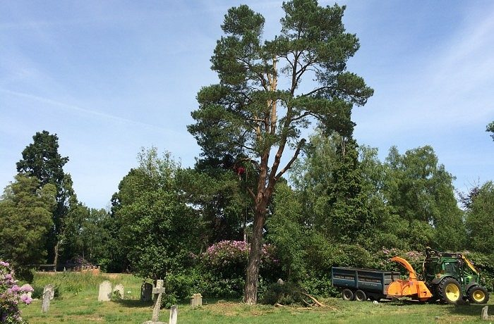 Tree works to commence at Brookwood Cemetery