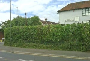 hedge-before
