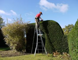 Hedge cutting precision is so important